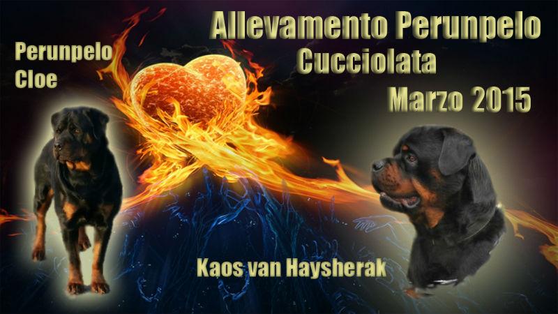 Cuccioli rottweiler nati 1 marzo 2015