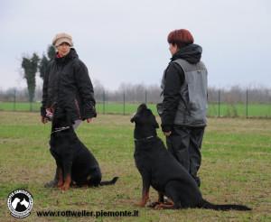 Rottweiler addestramento2