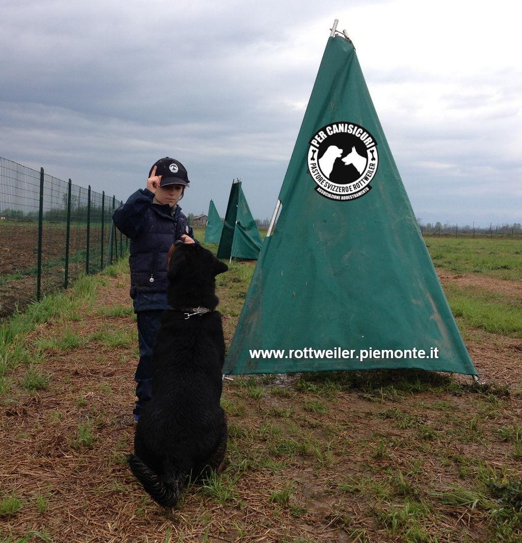 Rottweiler campo 1
