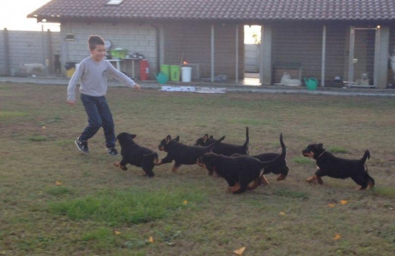 cuccioli1 (1)