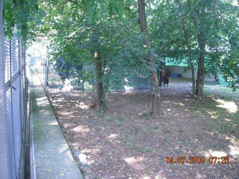 pensione cani gatti Torino 5